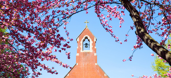 Dahlgren Chapel belltower framed with cherry blossoms